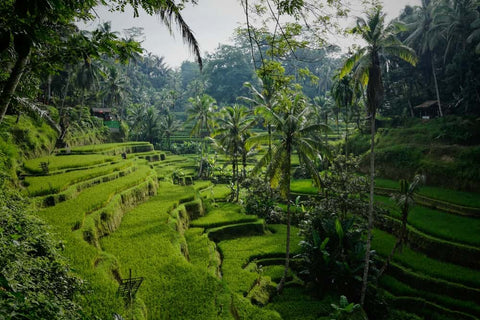 Bali - Plan a Vacation - Anne Cole