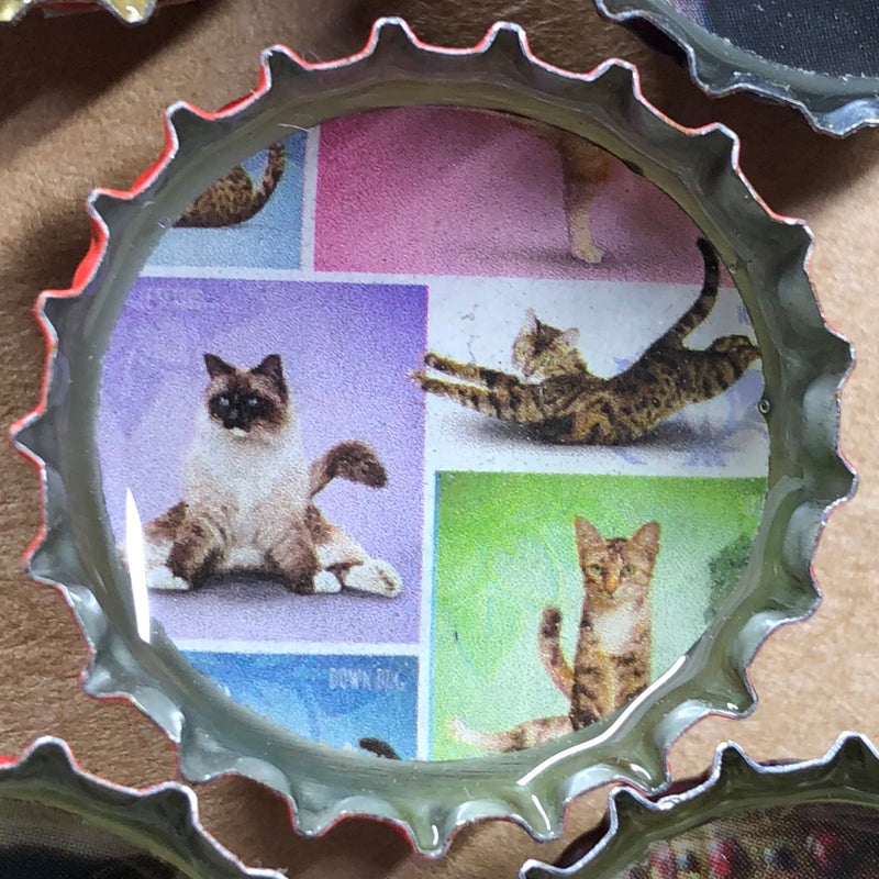 Cat Magnet Set