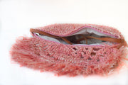 Rosé Handwoven Palm Clutch with Natural Shells, top/interior view.