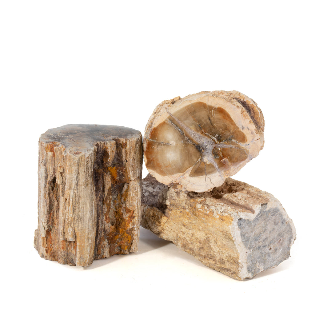 Petrified Wood Small Partial Polished Logs- Madagascar