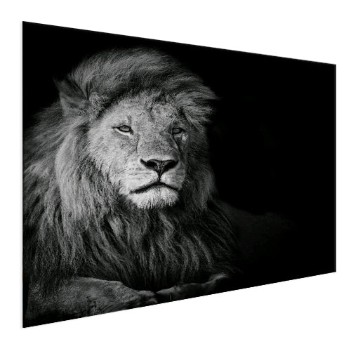 Lion - Ready for whatever  (Aluminum)