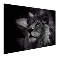 Lion - King Of The Animals (Aluminum)