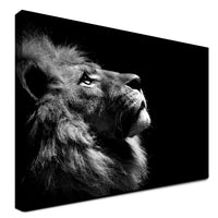 Lion - Admire (Canvas)
