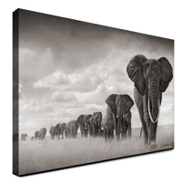 Elephant - Big Herd (Canvas)