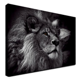 Lion - Elegance (Canvas)