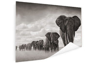 Elephant - Big Herd (Poster)