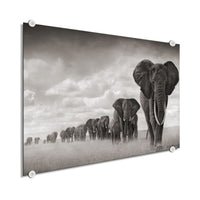 Elephant - Big Herd (Plexiglass)