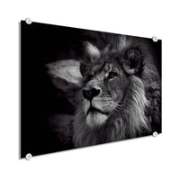 Lion - King Of The Animals (Plexiglass)