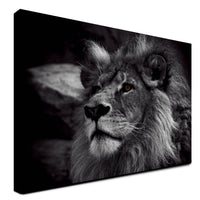 Lion - King Of The Animals (Canvas)
