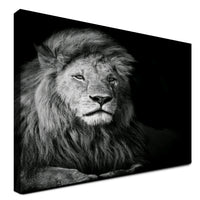 Lion - Ready For Whatever (Canvas)