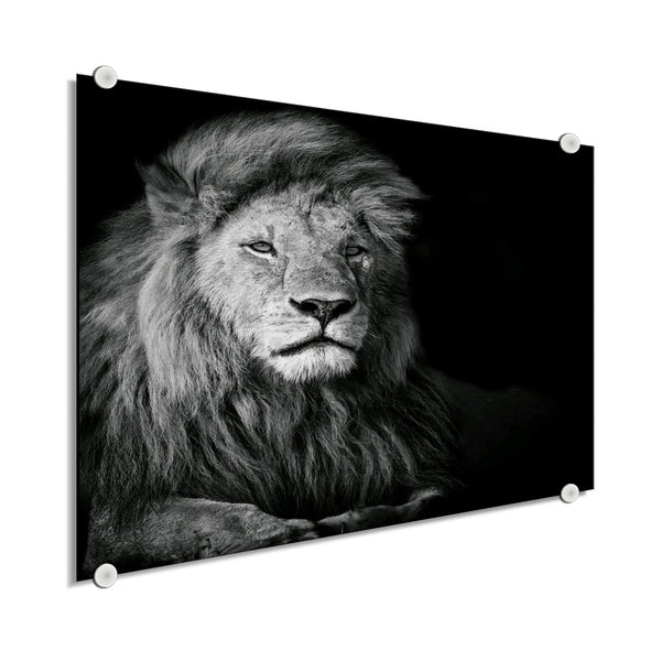 Lion - Ready For Whatever (Plexiglass)