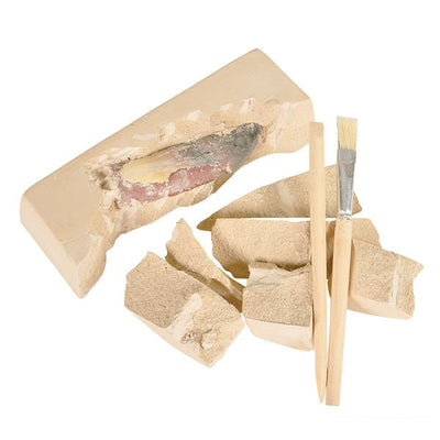 Dino Teeth Dig Kit | Field Museum Store
