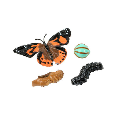 Butterfly Life Cycle Stages | Field Museum Store