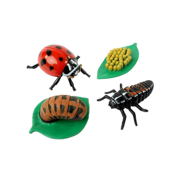 Ladybug Life Cycle Stages | Field Museum Store