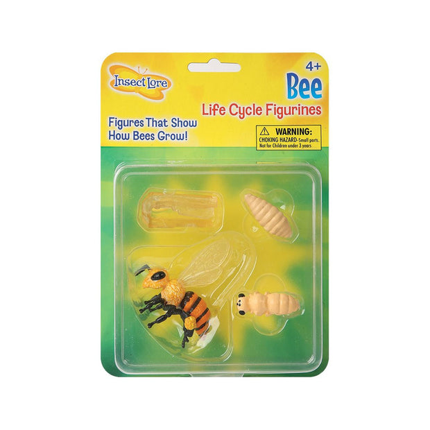 Bee Life Cycle Stages | Field Museum Store
