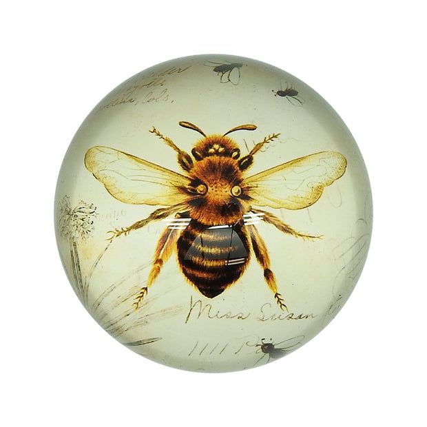 Bee Glass Dome Paperweight | Field Museum Store