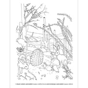 North American Mammals Dioramas Coloring Book | Field Museum Store