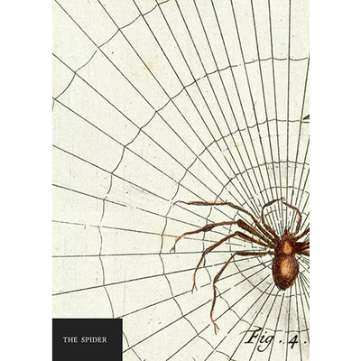 The Spider Notebook | Field Museum Store