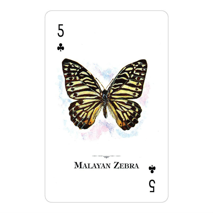 Butterflies of the Natural World Playing Cards | Field Museum Store