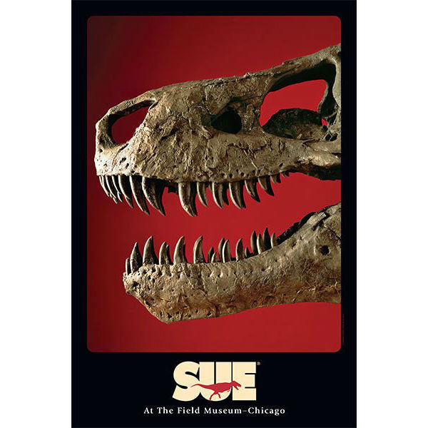 SUE the T. rex Skull Poster | Field Museum Store