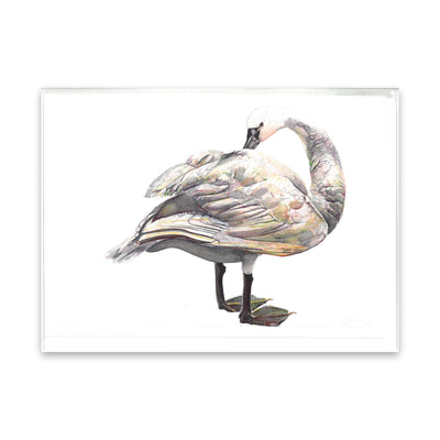 Peggy Macnamara Swan Greeting Card | Field Museum Store