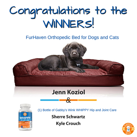 Gabby's Wink Orthopedic Bed and Whippy Giveaway Winners