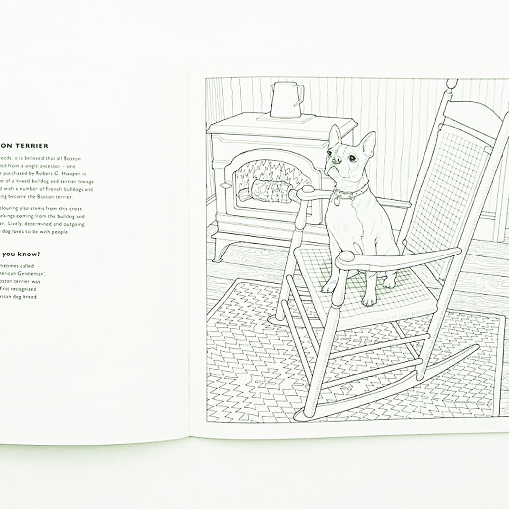 All About The Dog Colouring Book