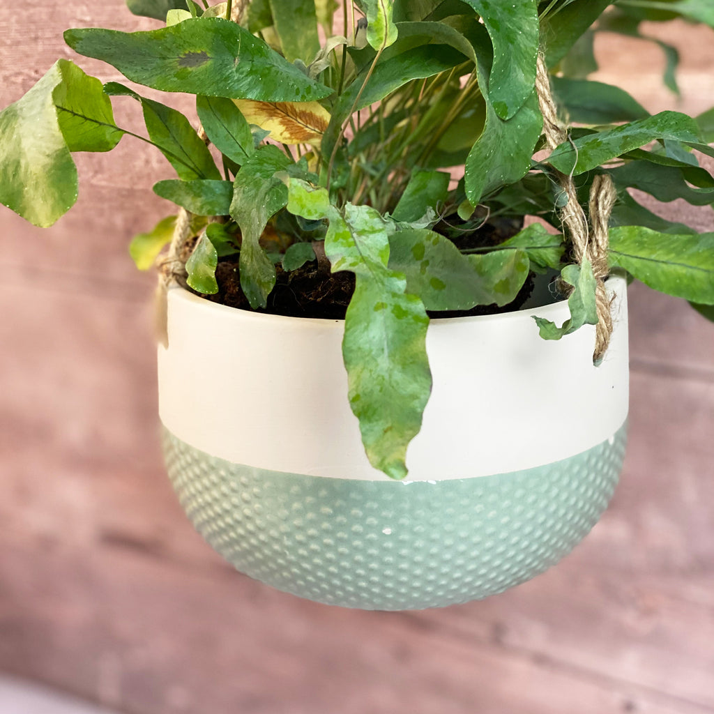 Duck Egg Hanging Planters