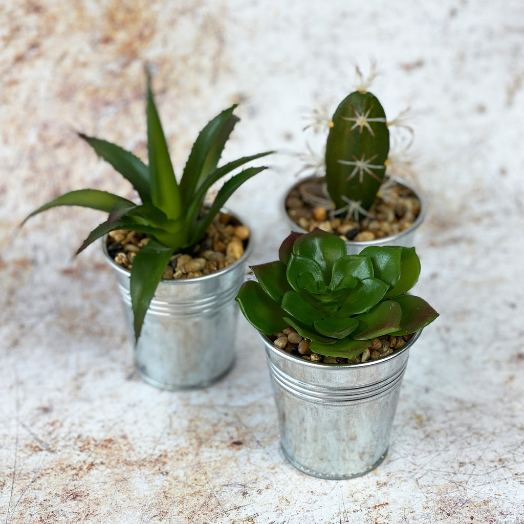 Faux Cactus and Succulent Trio 1