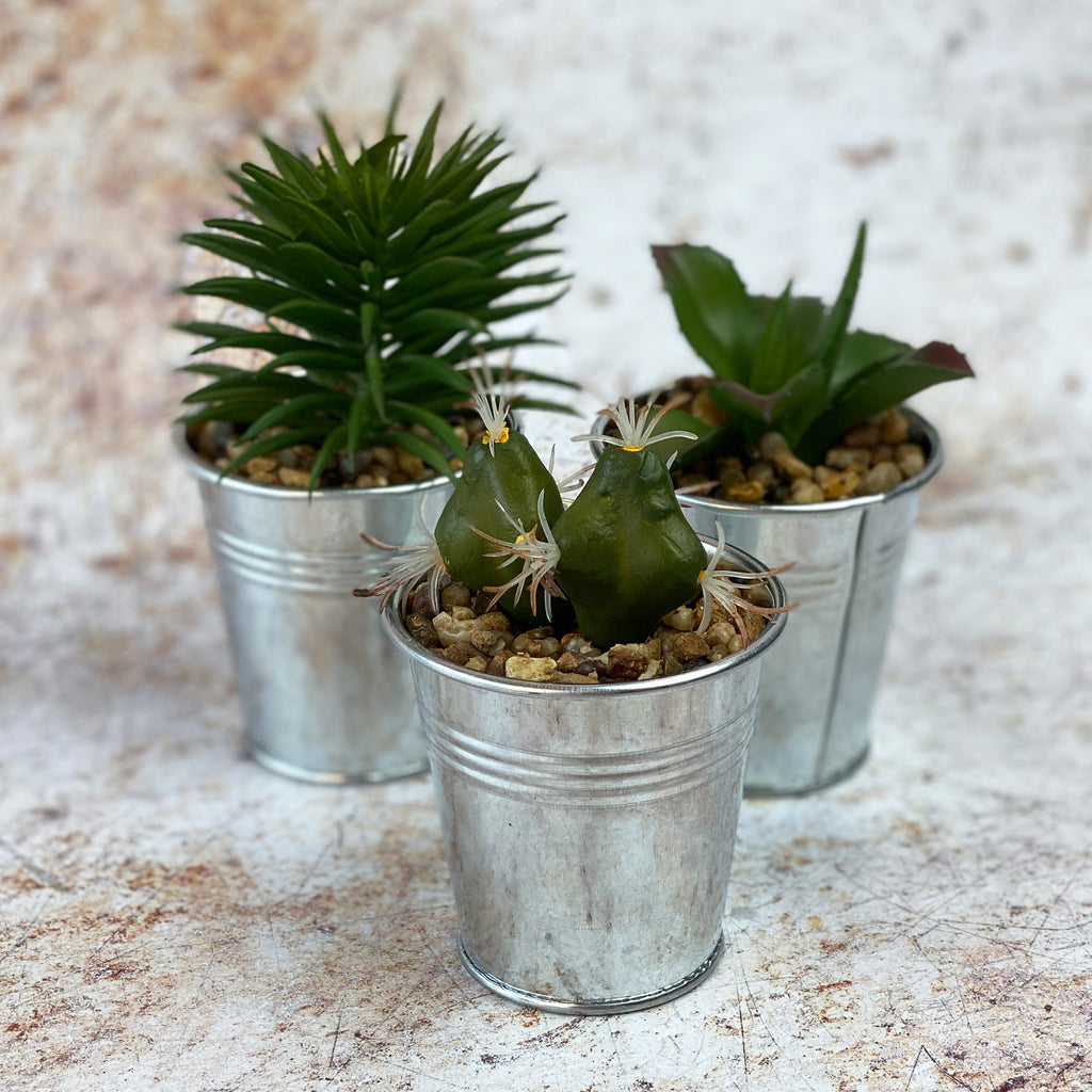 Faux Cactus and Succulent Trio 3