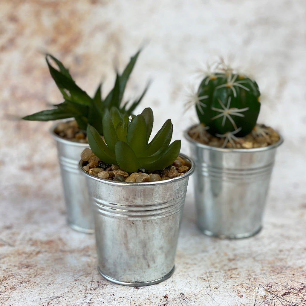 Faux Cactus and Succulent Trio 4