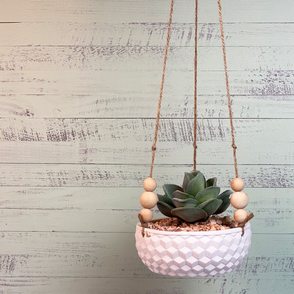 Agave Hanging Succulent
