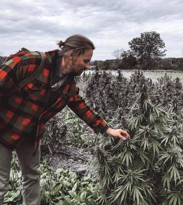 man wearing plaid jacket and ponytail touching hemp plant