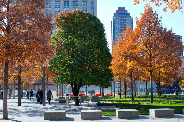 survivor tree 9/11 memorial