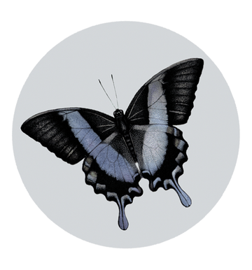 Papillon - Sticker