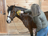 Fluff monkeys are great for horseback riders that want to add style to their stylish equestrian gear.