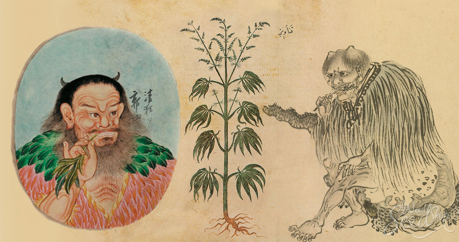 Ancient CBD Oil Use was Safe