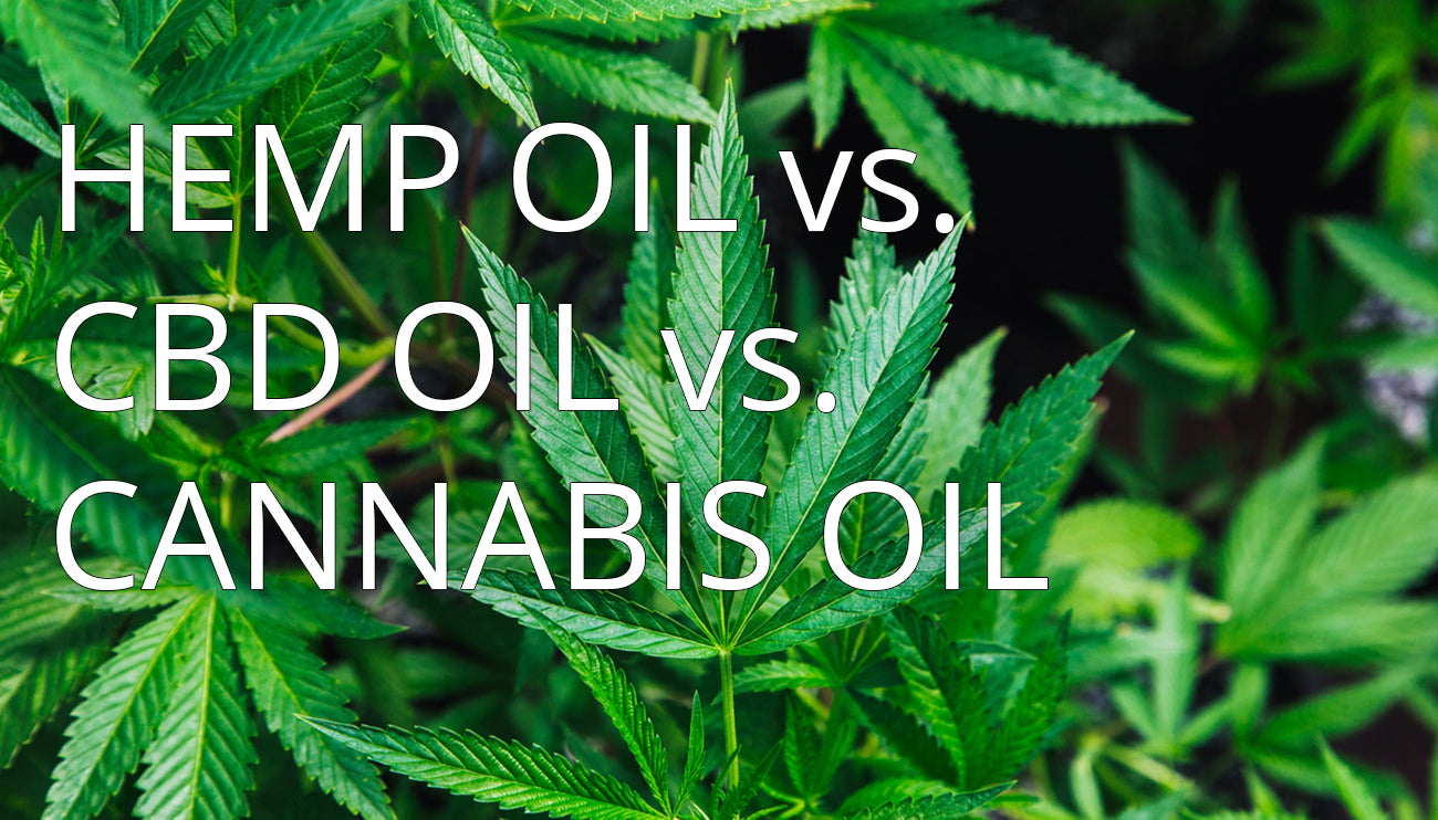Hemp Oil vs CBD Oil vs Cannabis Oil: Whats the difference?