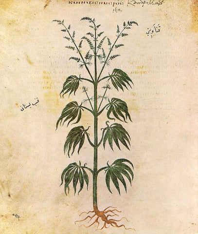 Ancient Medicinal Use of Cannabis