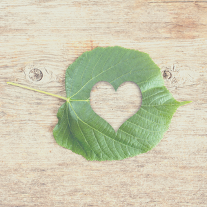 Natural tree leaf that is large with a heart cutout against a natural wood backdrop