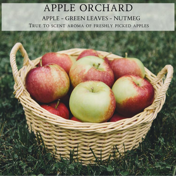 Apple Orchard - Natural Soy Candle - By Begonia & Bench®