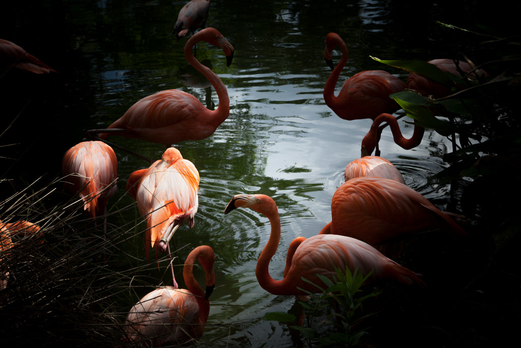 Flamingos (2013) by Eric Christopher Jackson