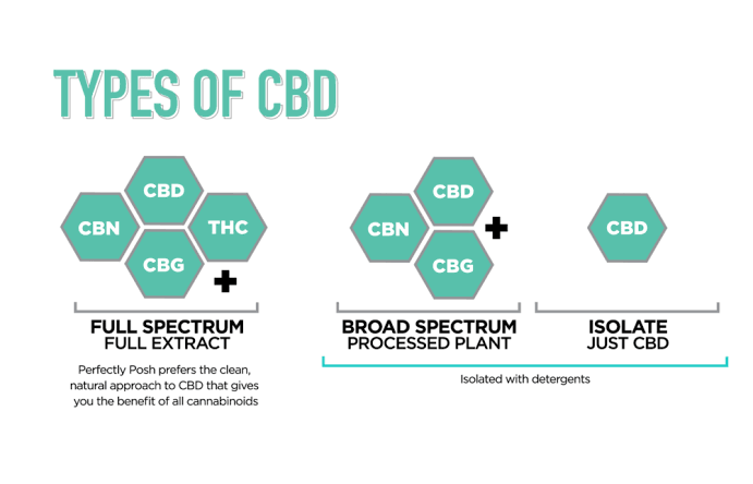 Broad Spectrum CBD Oil: Definition, Properties & Benefits