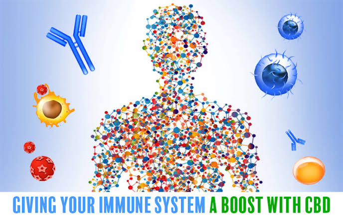 HOW CBD CAN BOOST YOUR IMMUNE SYSTEM