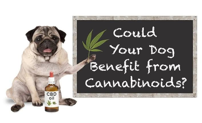 Top reasons to use CBD for pets !