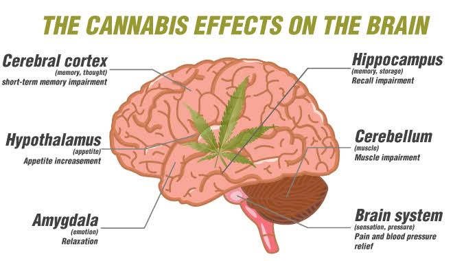 Can Cannabis Help Treat Traumatic Brain Injury?