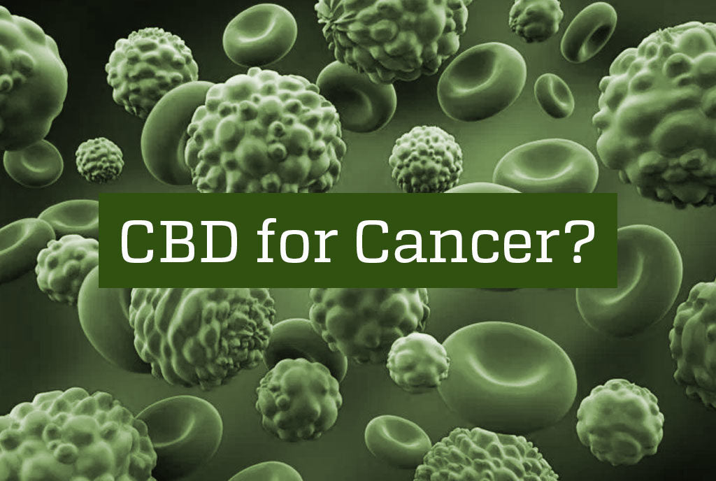 How does CBD support Cancer?