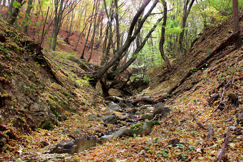 beautiful forest bathing place in autumn