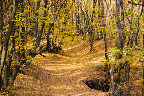 leafy-autumn-forest-path-cosy-walk