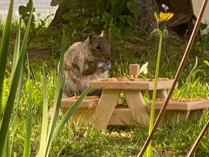 Squirrel Picnic Table Farmhouse Style
